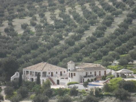 The Olive Groves behind Cortijo Las Salinas